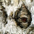 Painted Birch - Abstract from Nature by Marilyn Harris