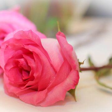 Pink Elegance by mechalamatthews