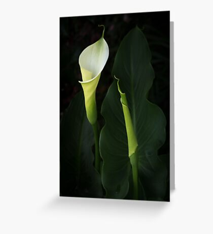 The Goddess Lily Greeting Card
