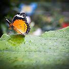 Butterfly House Mackinaw Island MI 2 by Tom Causley