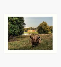 Highland Cow at Avington Park, Hampshire Art Print