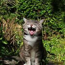 Singing cat by turniptowers