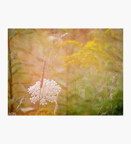 wild grass 17 Photographic Print