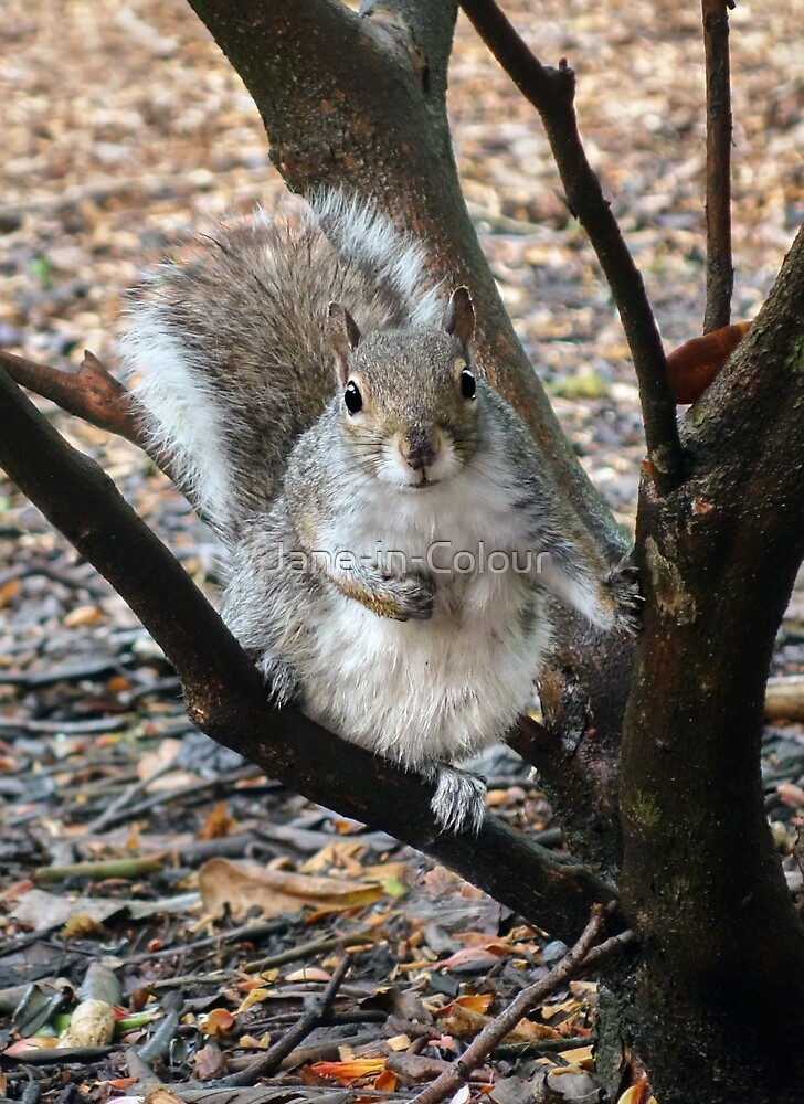 Curious Squirrel by Jane-in-Colour