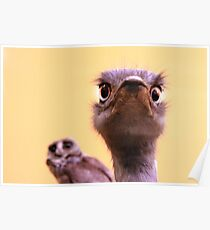 Curious Ostrich and Owl Cute Fun Photograph Poster