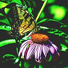 Social Butterfly by Jessica Manelis