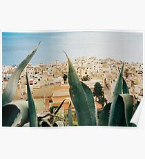 Marettimo Cacti Shot on Film (Porta 400) Poster