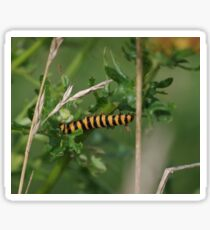 Cinnabar Moth Caterpillar  Sticker