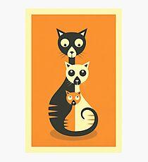 3 Cats Photographic Print