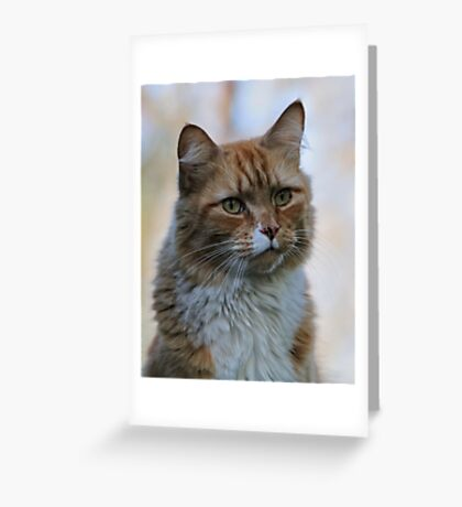 Are You Serious? Greeting Card