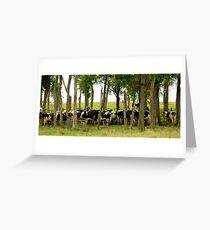 Cows Greeting Card
