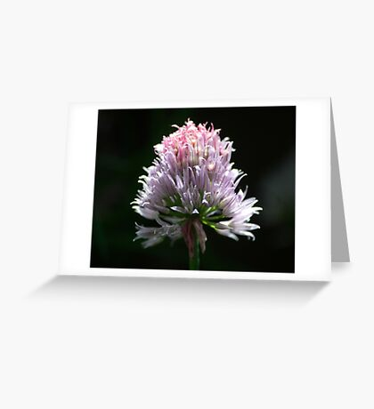 The Blossom Greeting Card