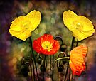 Yellow and Red Poppies by LudaNayvelt