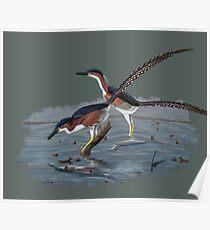 Buitreraptor Poster
