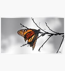 MONARCH BUTTERFLY IN A GRAY WORLD Poster