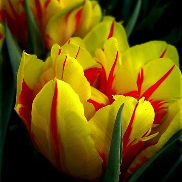 Monsella Flower by NyiZla