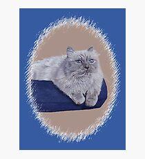 Bayou - A Portrait of a Himalayan Cat  Photographic Print