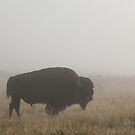 Bison Silhouette #3 by Ken McElroy