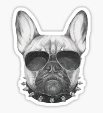 French Bulldog with collar and sunglasses Sticker