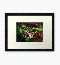 Expired Film Butterfly Framed Print