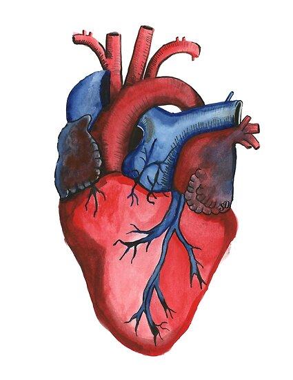 Pósters «Corazón anatómico pintado a mano de acuarela» de ...