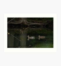 Duck in a pond. Art Print