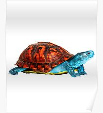 Realistic Squirtle Poster