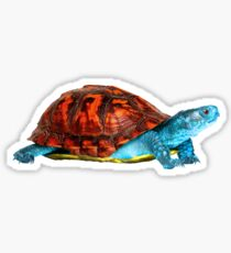 Realistic Squirtle Sticker