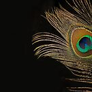 Peacock Feather Still Life by Lisa Knechtel
