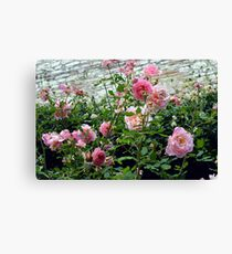 Pink gentle roses in the garden Canvas Print