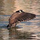 Wings Forward by IanMcGregor