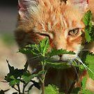 I found some catnip ;) by turniptowers