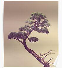 Bonsai: Posters | Redbubble