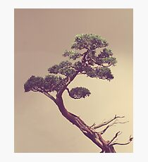 The Bonsai Photographic Print