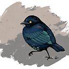 Brewer's Blackbird by skollipsism