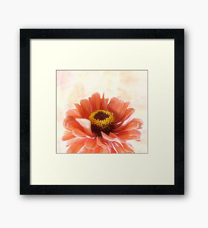 Zinnia Bright Framed Print