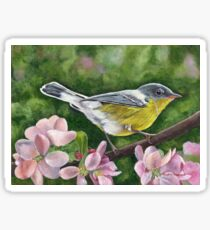 Magnolia Warbler Sticker