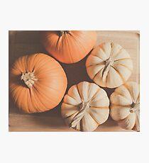 Pumpkins 4 Photographic Print