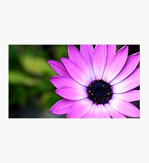 Closeup flower Photographic Print