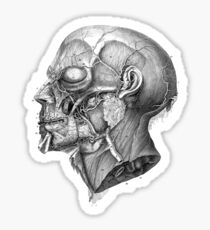 Vintage Anatomy Facial Muscles Sticker