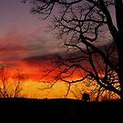 Sunrise  by FrankieCat