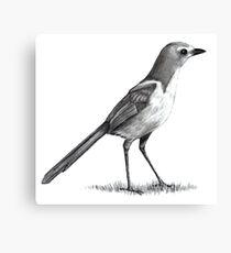 Srub Jay: Bird in Pencil: Standing Bird: Wildlife Art Canvas Print