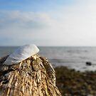 Ein tag am Meer von Iridescentcloud