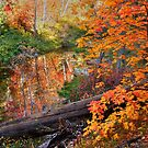 Fall In Oak Creek Canyon by K D Graves Photography