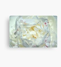 Love ~ This White Peony Canvas Print