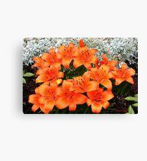 Orange Lilies in My Garden Canvas Print