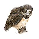 Spectacled Owl by NearBird