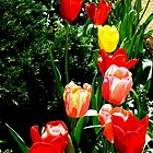 Spring Tulips by sandysartstudio