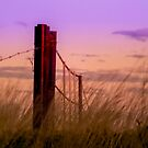 Sunset over the Farm Gate by JuliaKHarwood