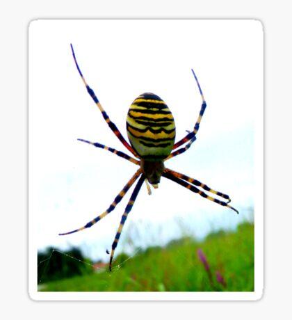 Wasp Spider Sticker